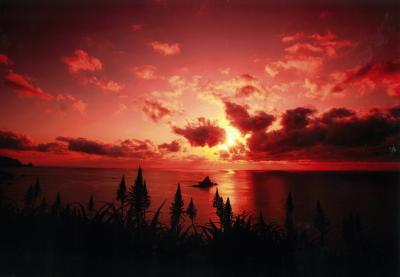 (特選)アロエの丘の夕景