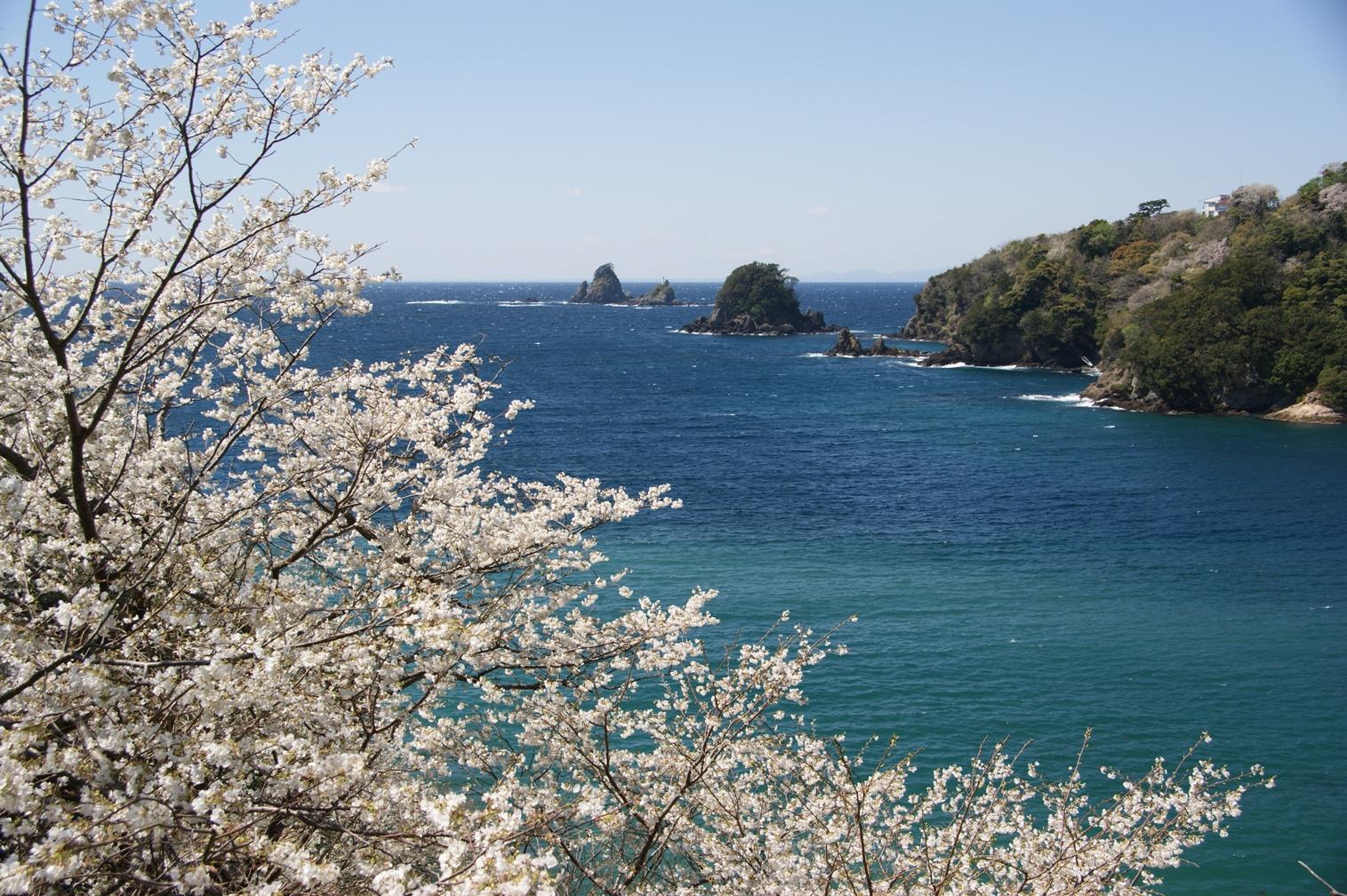桜の咲くころ(入選)