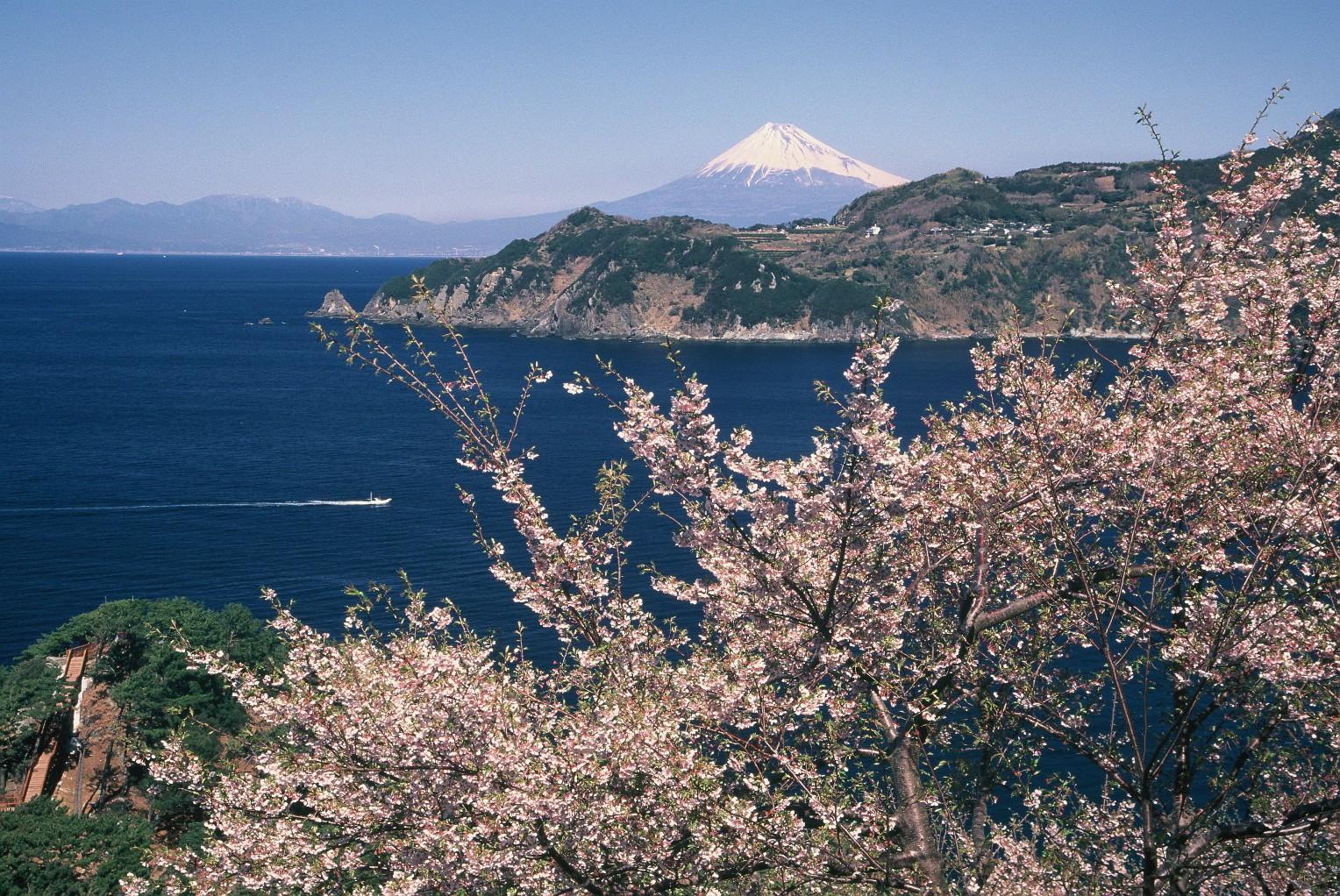 早春の桜と富士(入選)