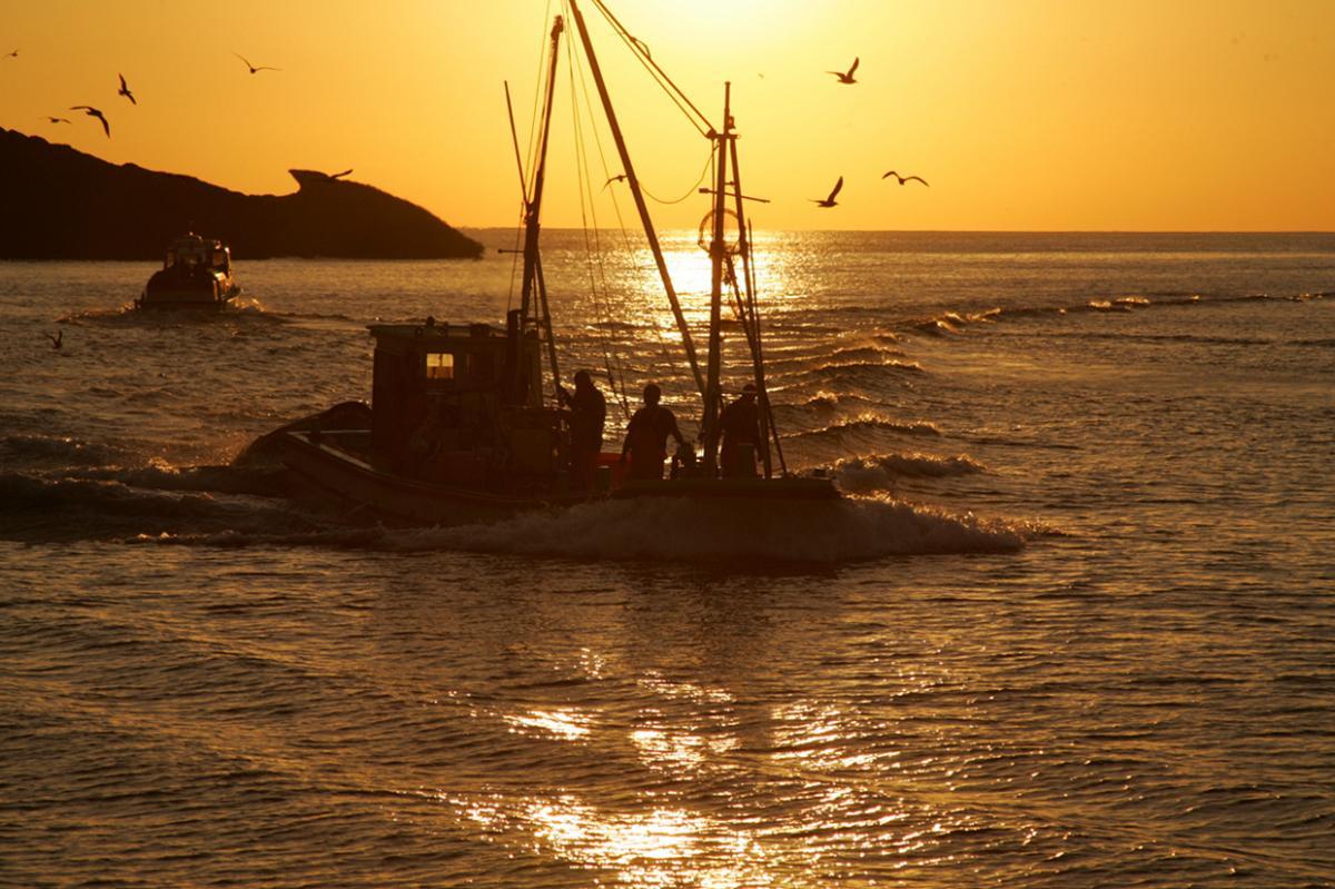 (入選)漁船に群がるカモメ