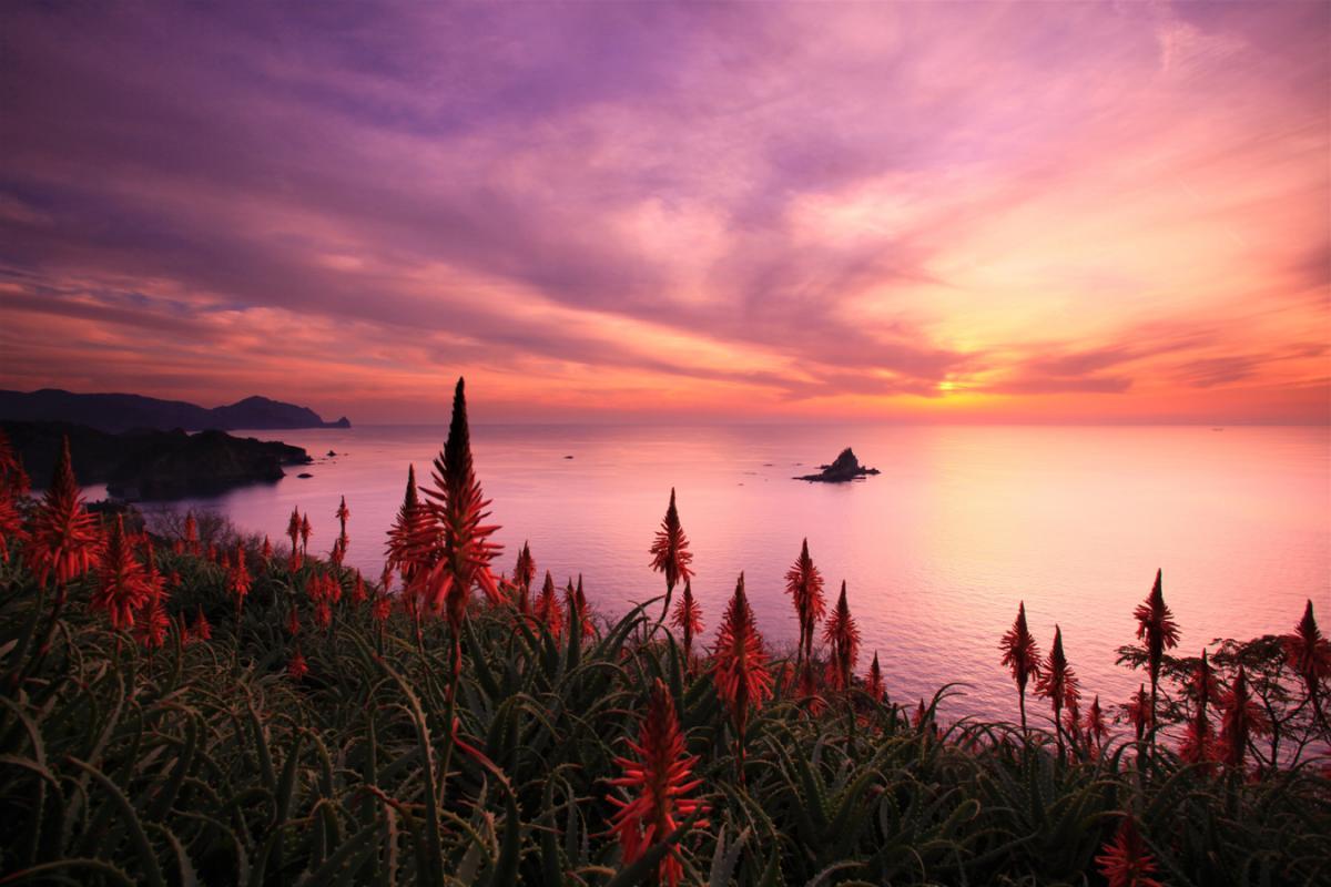 (特選)アロエの丘の夕陽
